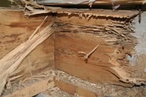 orange-county-termite-control